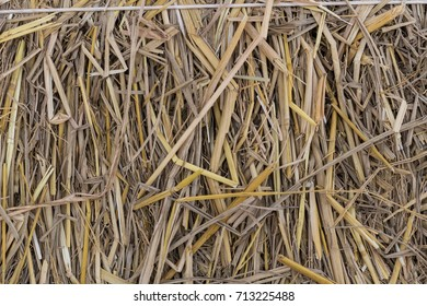 dry straw texture background