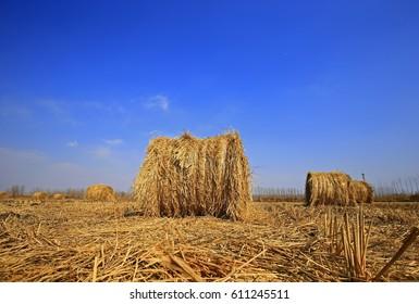 Dry straw under the blue sky