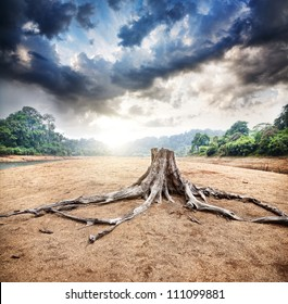 Dry stump at jungle and dramatic sky background at sunrise in Periyar wildlife sanctuary in Kerala, India