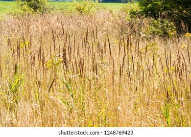 Dry and tall grass in a clearing in the forest