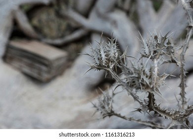 Dry thistles on the background of the roots of the tree
