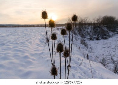 dry thistles at sunset into a frozen winter day