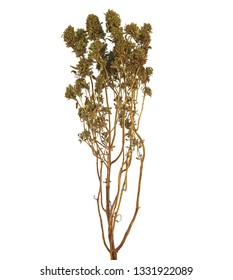 Dry thyme, summer savory, isolated on white