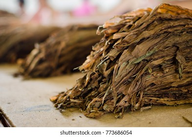 Dry tobacco leaves in tobacco factory in Cuba