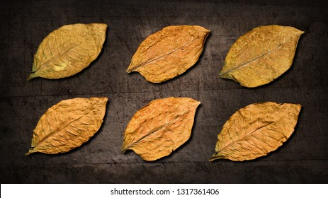 Dry tobacco leaves on black wooden background
