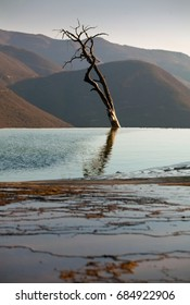 dry tree - Shutterstock ID 684922906