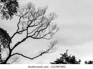 Dry tree against cloudy sky