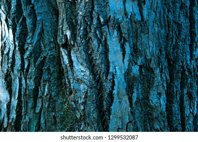 dry tree bark texture and background or pattern