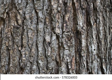 dry tree bark texture background