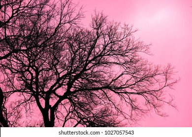 Pink Japanese Tree Images Stock Photos Vectors Shutterstock