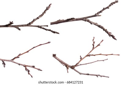 Dry tree branches isolated on white background. Set