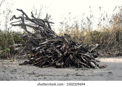 Dry tree branches lie on a heap in nature