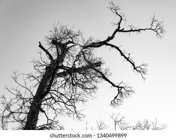 Dry tree with cloudy sky in forest