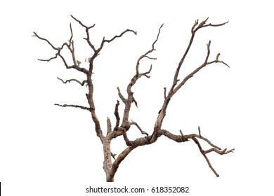 Dry tree, dead tree with beautiful branch isolated on white background.with clipping path.