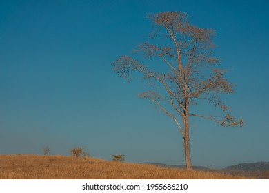 The dry tree with full branches on a golden yellow meadow. There is a sunny day with a blue sky in a soft tone. Feelings of love and romance. The idea for natural wallpaper with copy space. - Shutterstock ID 1955686210