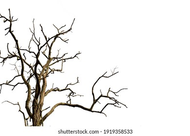 A dry tree isolated on a white background.