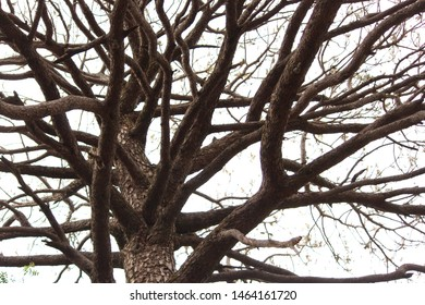 A dry tree in kasauli india