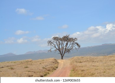 Dry tree on the African landscape