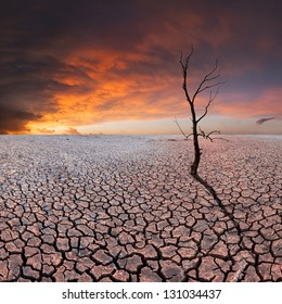 Dry tree on dry earth, majestic clods in the sky, ecology disaster