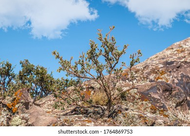 a dry tree on a mountainside against a valley background with green vegetation under a blue sky with white clouds on a summer day