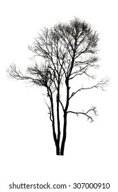 Dry tree shape isolate