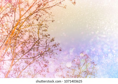 dry tree silhouette colorful sunset sky with glitter light in soft pastel tone,romance background