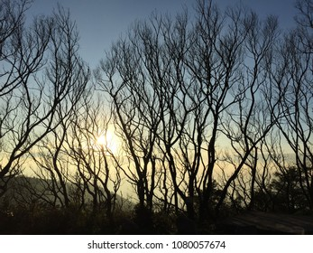 Dry tree silhouette under the dusk in fall. Captured in Tai Mo Shan, Hong Kong