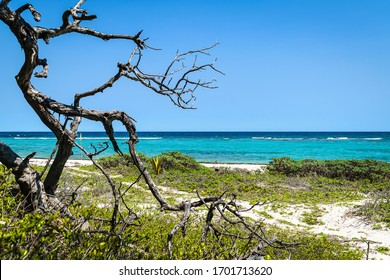 Dry tree trunk at the tropical Xcacel beach on the Caribbean Sea coast. Marine turtles reserve. Beautiful tropical landscape, Quintana Roo, Mexico.