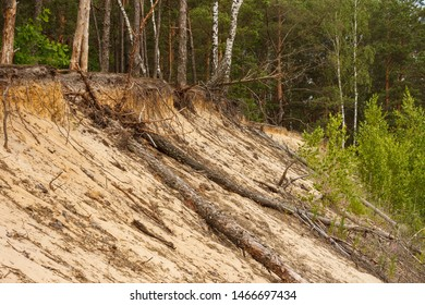 Dry tree trunks lie on a sandy slope. Forest grows on the edge of the sand slope