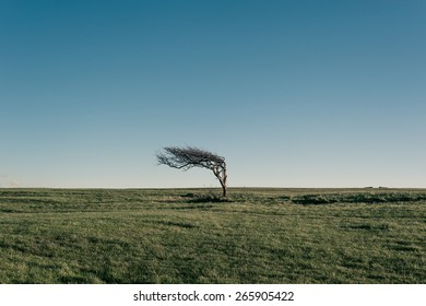 Dry tree in windy place near Eastbourne