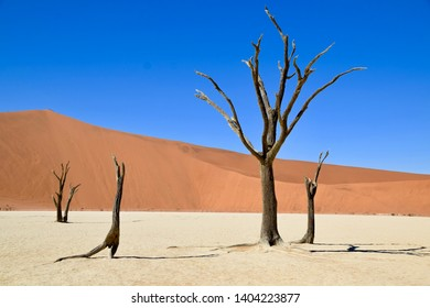 Dry trees on a white salt pan in front of the orange sand dune in Deadvlei