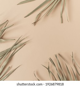Dry tropical exotic palm leaves on pale pastel peachy background. Flat lay, top view minimalist floral pattern aesthetic composition. Summer time concept. Blank copy space mockup.