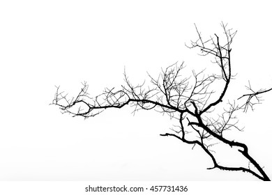 Dry twig on the tree in Black and White