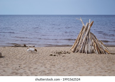 Dry twigs stick out of the sand on a wild beach on a warm day. The sand is covered with spots of light and shadow. A dog runs on the sand