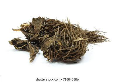 Dry valerian root (Valeriana officinalis). The drug (Valerianae radix) has long tradition as herbal medicinal product in order to relieve mild symptoms of mental stress and to aid sleep.