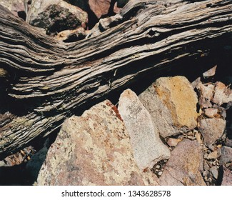 The dry but varying climate of the Chisos Valley in Texas presents a treat for the visual interests in what Mother Nature provides us in such an arid region.