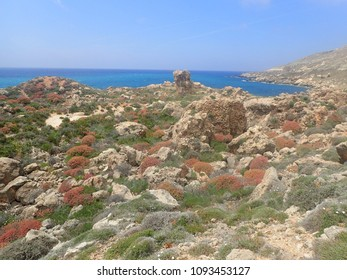 Dry vegetation on North Maltese coast