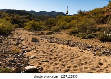 Dry wash stream bed and cactus in the arid desert near Prescott, Arizona