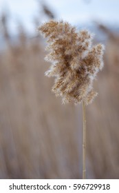 Dry weed - Shutterstock ID 596729918
