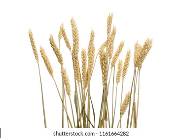 Dry wheat ears, grain isolated on white background, with clipping path