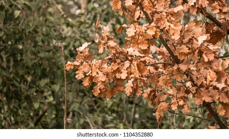dry winter leaves in focus and a green tree in the background