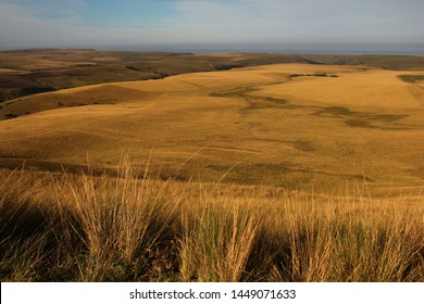 Dry winter yellow coastal grasslands along the Transkei coast, with the blue sea in the background, Eastern Cape, South Africa.
