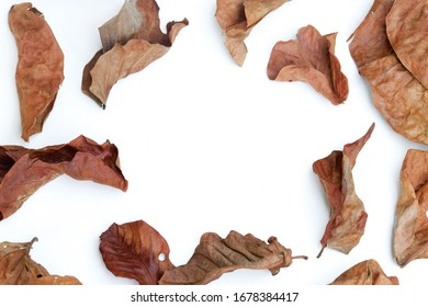 Dry withered brown leaves autumn on white background
