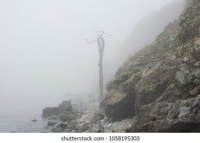 Dry wood in the fog, the Lake Baikal, Russia