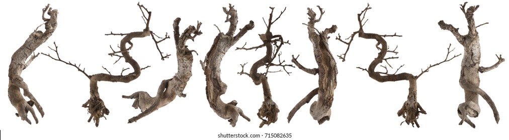 Dry wood tree trunk isolated on white