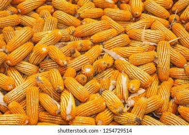 dry yellow corn