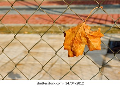 Dry yellow leaf stuck in chain link fence outdoor. Warm evening light. Abstract concepts: lack of freedom, farewell, ending, autumn mood