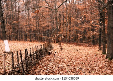 dry and yellow leaves fallen from trees in an autumn forest with a fence