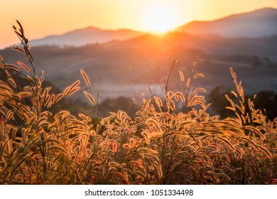 Dry Yellow tropical Grass Meadow during sunse and golden light with mountain background.
