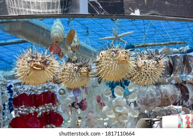 Dryed Blowfish souvenir in Crete